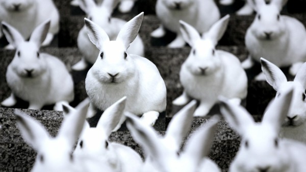Life-sized white laboratory rabbits are displayed at the entrance of the EU Parliament in Brussels