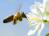 Belasteter Bodensee-Honig wird vernichtet