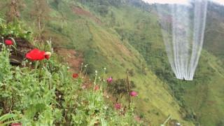 Pestizid Streit um Unkrautvernichtungsmittel