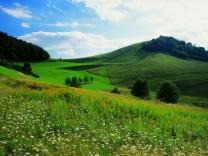 Von der Sonne verwöhnt - Am Kaiserstuhl wachsen Reben