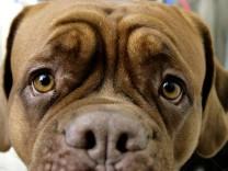 Gronau registriert Hundevermehrung