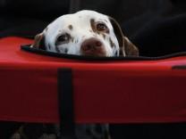 Über 200 Rassen bei Hundeausstellung