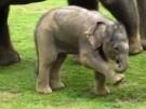 zoomin_20111024_elefantenbaby