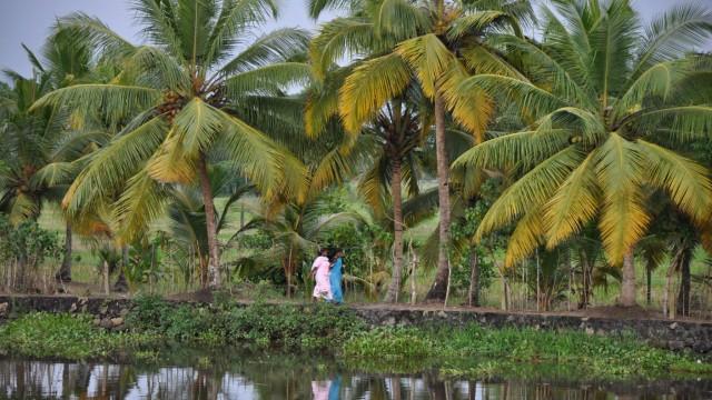 Kerala Indien Asien Tempel Kokospalmen Kathakali