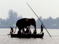 Elefant auf einem Boot