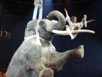 Zirkuselefant bei Circus Krone in München