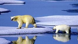 Klimaschutz, Eisbären, dpa