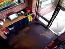Hirsch springt durch Fenster in Taco Bar (Vorschaubild)
