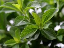 Stevia, Süßstoff, Zucker
