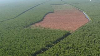 Palmöl Felda Börsengang Deutsche Bank