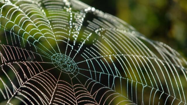 Spinnenseide ist elastisch wie Gummi oder wie eine Sprungfeder