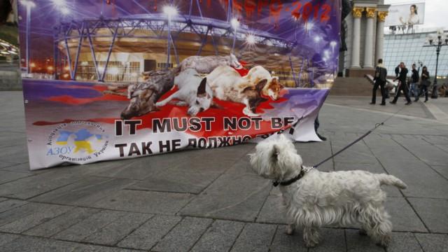 Tierschutz Skandal im EM-Gastgeberland Ukraine