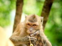 Diebischer Affe