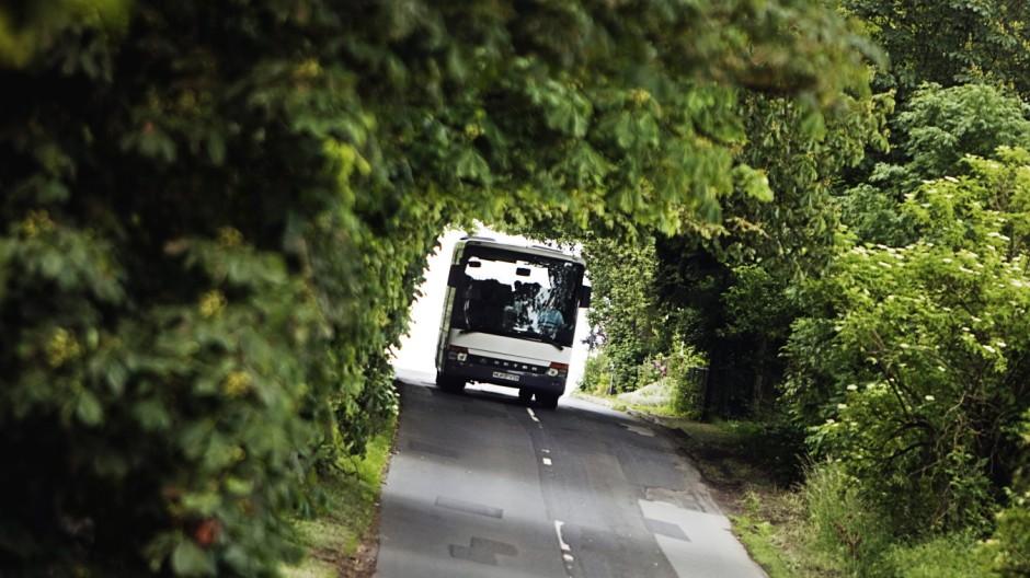 Busfahrt ins Grüne - Allee bei Neu Gaarz