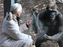 Conservationist Dr Jane Goodall at Melbourne Zoo