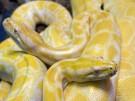 Brazil_Snakes_XAP112