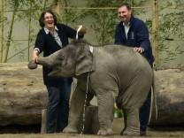Taufe von Elefantenbaby 'Ludwig'