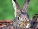 Rewe lässt Kaninchen leben (Bild)