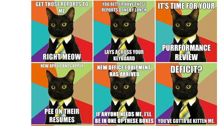 Internet-Memes 2011: Business Cat