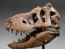 Dinosaurier Fossilien