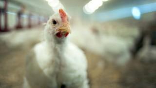 Regierung will Antibiotika-Einsatz für Tiere einschränken