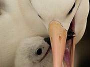 Albatrosse, istock