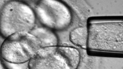 Genforschung Patente auf Stammzellen