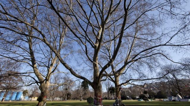BUND kuendigt Eilantrag gegen moegliche Baumfaellerlaubnis fuer 'S21' an