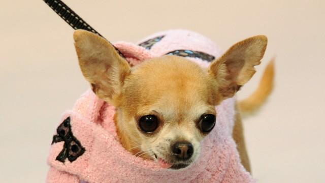Prozess Prozess um Hund in Mietwohnung