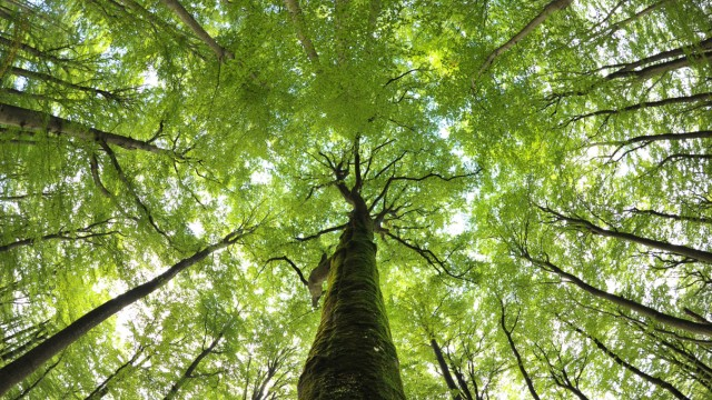Buchenwälder sind Unesco-Weltnaturerbe