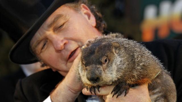 Groundhog handler John Griffith holds famed weather prognosticating groundhog Punxsutawney Phil before Phil makes his annual weather prediction