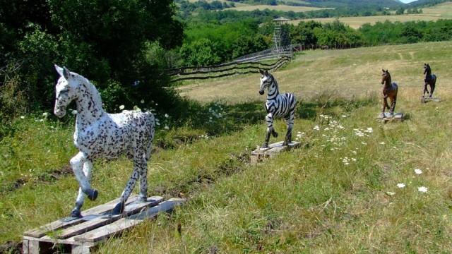 Zebras Evolution