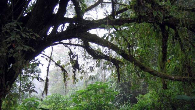 Regenwald in Kamerun