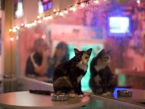 A cat sits near its reflection at a cafe in the Thai seaside resort city Hua Hin