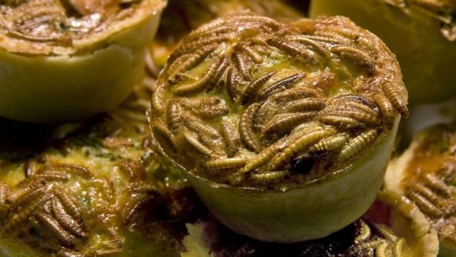 Mehrwürmer sind ein gesundes und umweltfreundliches Nahrungsmittel