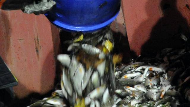 Behörden untersuchen Fischsterben in der Alz