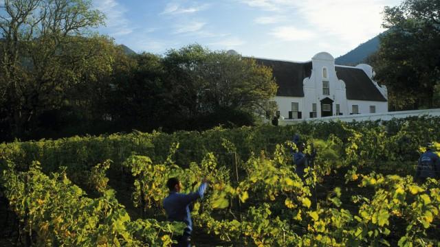 Weinberge mit Tradition: Groot Constantia liegt in Kapstadt