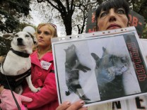 Hunde-Tötungen in der Ukraine