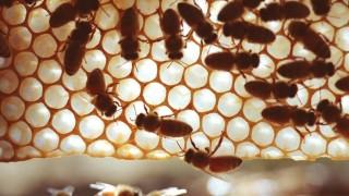 Imker beklagen Bienensterben