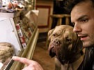 Welt der Wirtschaft - Hotdog mit Dogge (Bild)