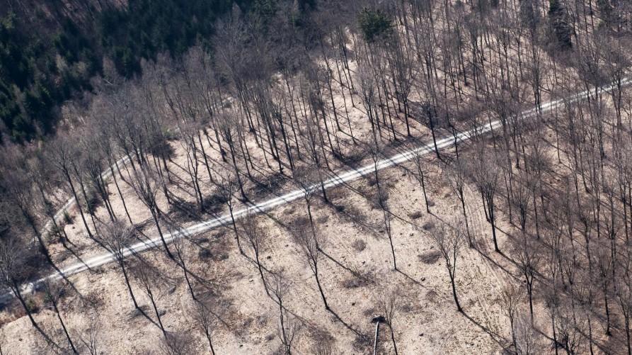 Greenpeace ruegt Kahlschlag in Laubwaeldern