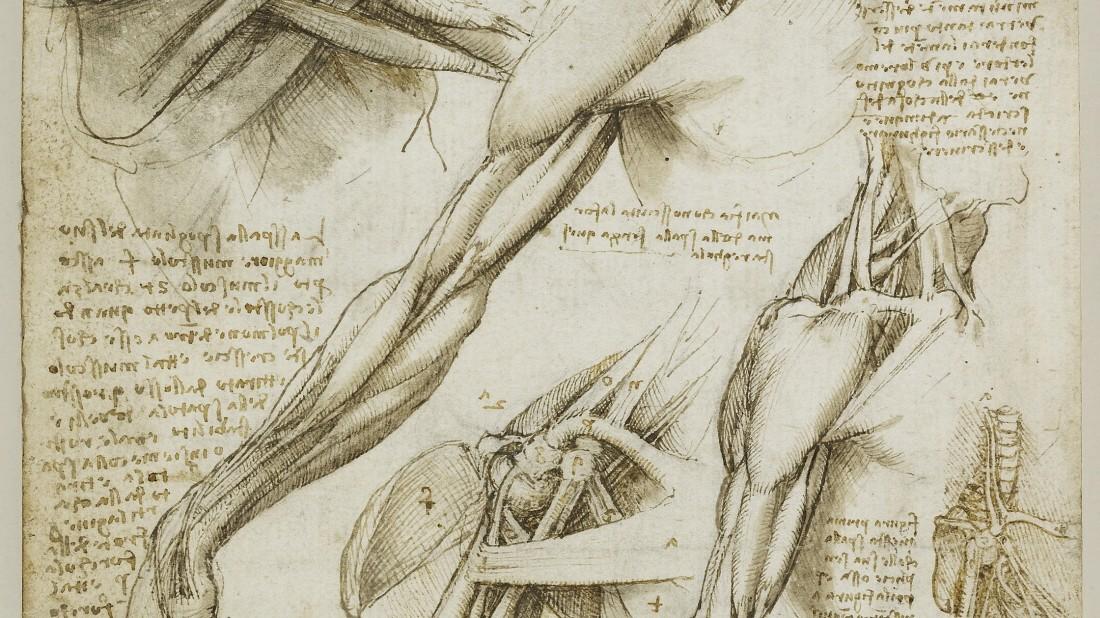 Medizingeschichte - Um 1510 zeichnete da Vinci - Medizingeschichte ...