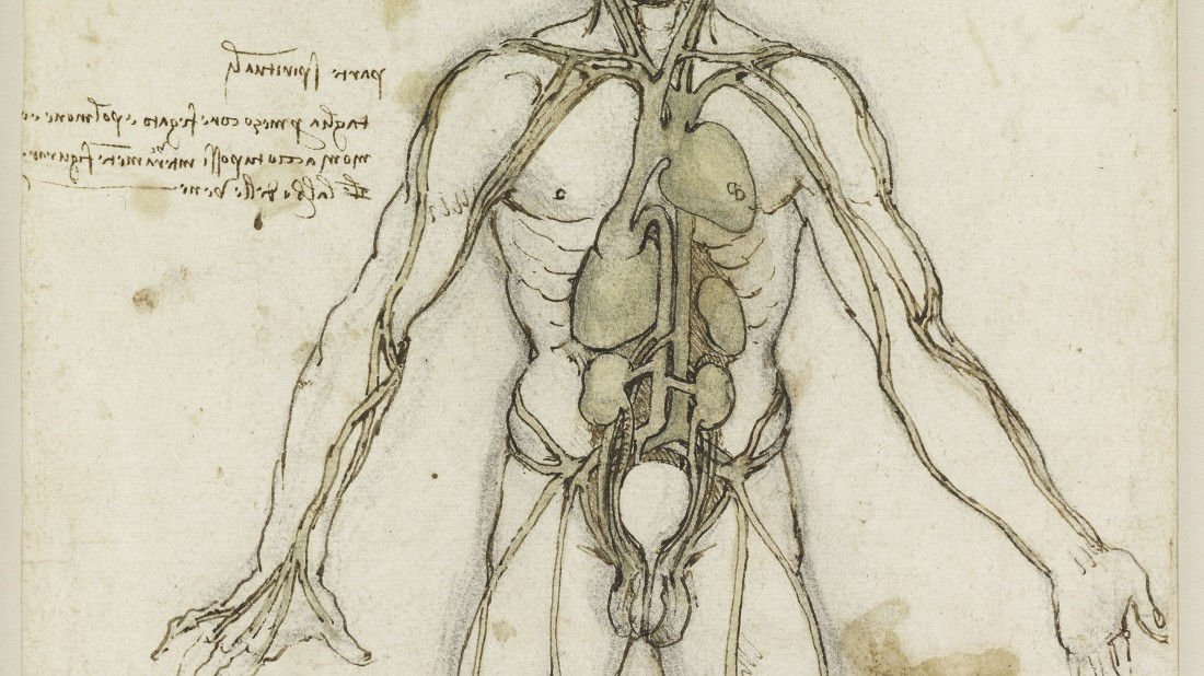 Medizingeschichte - Leonardo als Anatom - Medizingeschichte ...