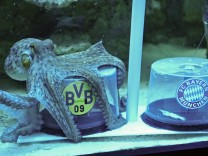 Kraken-Orakel zum DFB-Pokalfinale