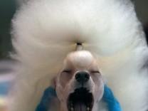 Menschliches Gaehnen wirkt ansteckend auf Hunde