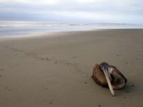 An den Stränden im Norden Perus liegen tote Tiere, darunter mindestens 5000 Pelikane.
