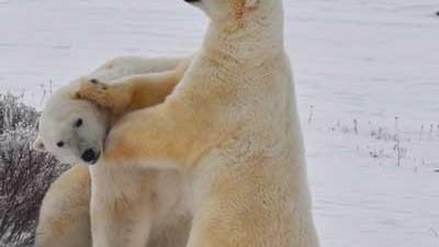 Arktis Klimawandel