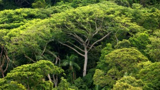 Regenwald Abholzung Brasilien Umweltschutz Klima