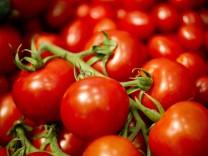 Tomaten-Genom ist entschlüsselt