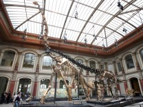 Dinosaurier aus dem Berlinier Museum für Naturkunde war leichter als gedacht